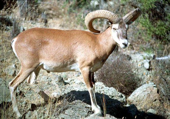 Γνωρίζατε ότι τα αγρινά βρίσκονται στην Κύπρο για 8000 χρόνια;