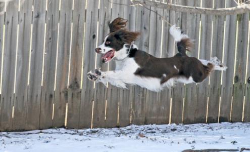 Όταν το σκυλί έχει υπερβολική ενέργεια…