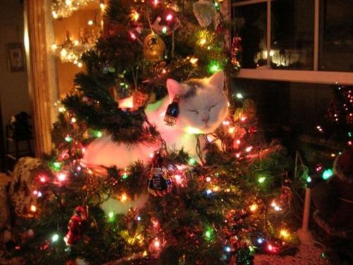 γάτες και χριστούγεννα