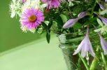 Θέλεις φρέσκα λουλούδια στο βάζο για καιρό;
