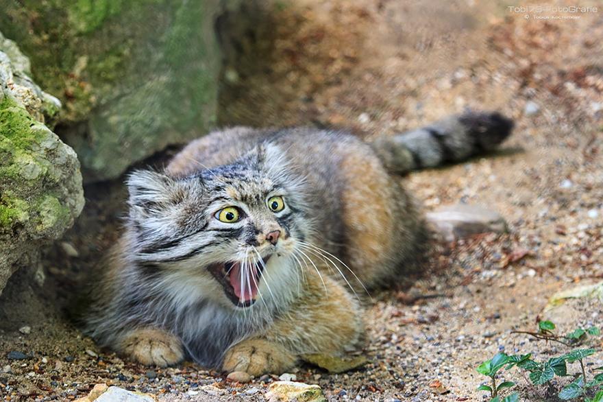 a688f69893ad Η πιο εκφραστική γάτα του πλανήτη – Ikypros
