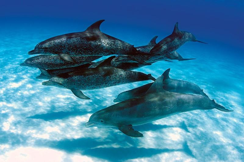 Δελφίνια
