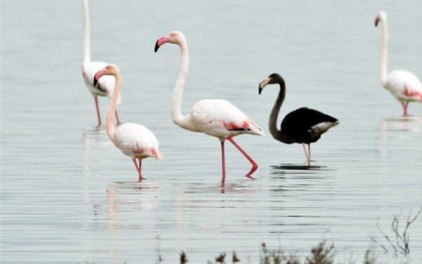 Μαγευτική η Λίμνη Ορόκλινης με τα φλαμίγκο που έφθασαν (Video)