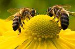 Οι άνθρωποι αγαπούν τις μέλισσες αλλά μισούν τις σφήκες