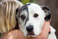 Τα σκυλιά μισούν τις αγκαλιές!