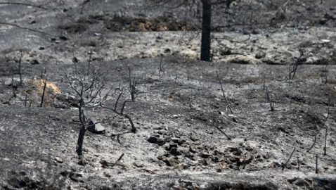 Τεράστια καταστροφή άφησε η πυρκαγιά στην περιοχή Τυλληρίας