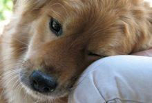 Τι δεν πρέπει να κάνετε ποτέ στο σκύλο σας!
