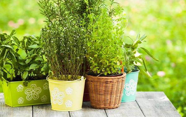 Πέντε βότανα όχι και τόσο αθώα