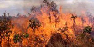 Από καύση σκυβάλων η δασική πυρκαγιά στα Κελλιά