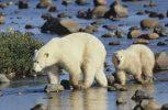 """WWF: Σε κατάσταση """"εμφράγματος"""" ο πλανήτης"""