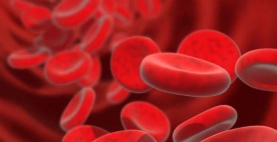 Δημιούργησαν τέλεια αιμοφόρα αγγεία στο εργαστήριο