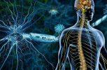 Οξειδωτικό στρες και παχυσαρκία σχετίζονται με αυξημένο κίνδυνο εμφάνισης πολλαπλής σκλήρυνσης, καταδεικνύει έρευνα