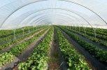 Σε ισχύ από 1η Γενάρη ο νέος κανονισμός omnibus για τις πληρωμές αγροτικών κονδυλίων