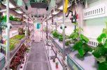 Λαχανικά στο διάστημα από ευρωπαίους επιστήμονες