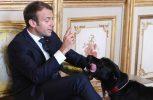 O σκύλος του Μακρόν έκανε την ανάγκη του ενώ ο Πρόεδρος είχε συναντήσεις με μέλη της Κυβέρνησης