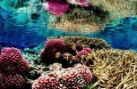 Η κλιματική αλλαγή μετέτρεψε τη Μεσόγειο σε τροπική θάλασσα