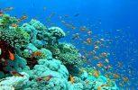 Ανακαλύφθηκε άγνωστο οικοσύστημα στην Καραϊβική