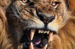 Λιοντάρι εκτός ελέγχου επιτίθεται σε παιδιά στη Σαουδική Αραβία (video)