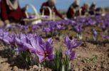 Δημιούργησαν νέα χρώματα λουλουδιών για να τονώσουν τον τουρισμό