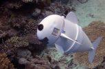 Tο πρώτο ρομποτικό ψάρι που το… ερωτεύονται τα άλλα ψάρια
