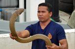 Διάσημος γητευτής φιδιών πέθανε από επίθεση κόμπρας