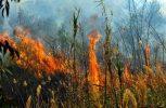 Σε εξέλιξη για δεύτερη μέρα η πυρκαγιά στη Σκόπελο