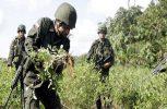 Η Κολομβία παραμένει στην 1η θέση στην παραγωγή κοκαΐνης στον πλανήτη