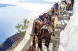 CNN: Η Ελλάδα απαγορεύει σε υπέρβαρους τουρίστες να ανεβαίνουν στα γαϊδουράκια της Σαντορίνης
