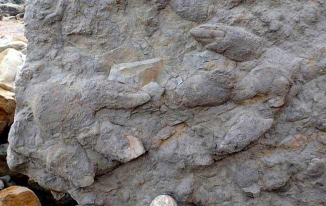 άνθρακα που χρονολογείται απολιθώματα δεινοσαύρων Τι σημαίνει να βγαίνεις ραντεβού