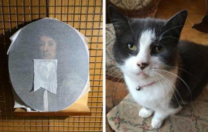 Γάτα κατέστρεψε σπάνιο έργο τέχνης που αγόρασε το αφεντικό της