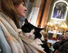 Ζώα με τους ιδιοκτήτες τους σε εκκλησία της Μαδρίτης, στη γιορτή του προστάτη τους Αγίου Αντωνίου